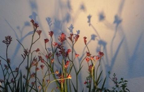 תאורת גינה – מימד נוסף לגינה