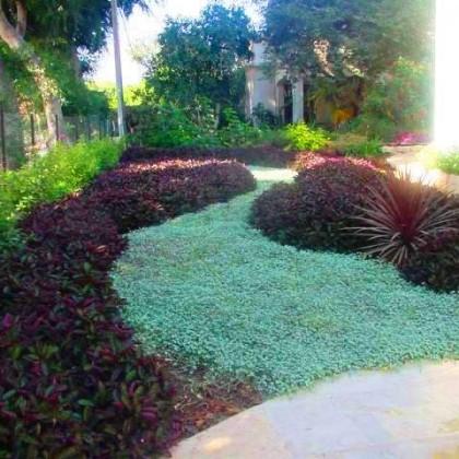 עיצוב עם צמחים