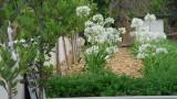 garden_16