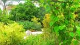 garden_24