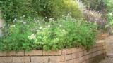 garden_26