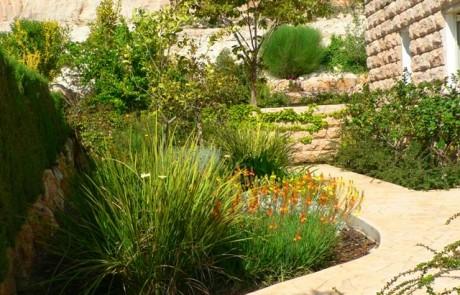 להקים גינה שלמה עם צמחים חסכוניים במים